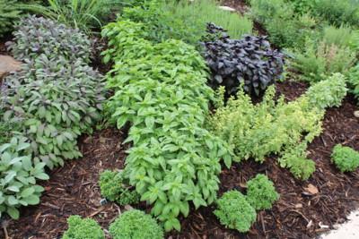 Allen Herb Garden